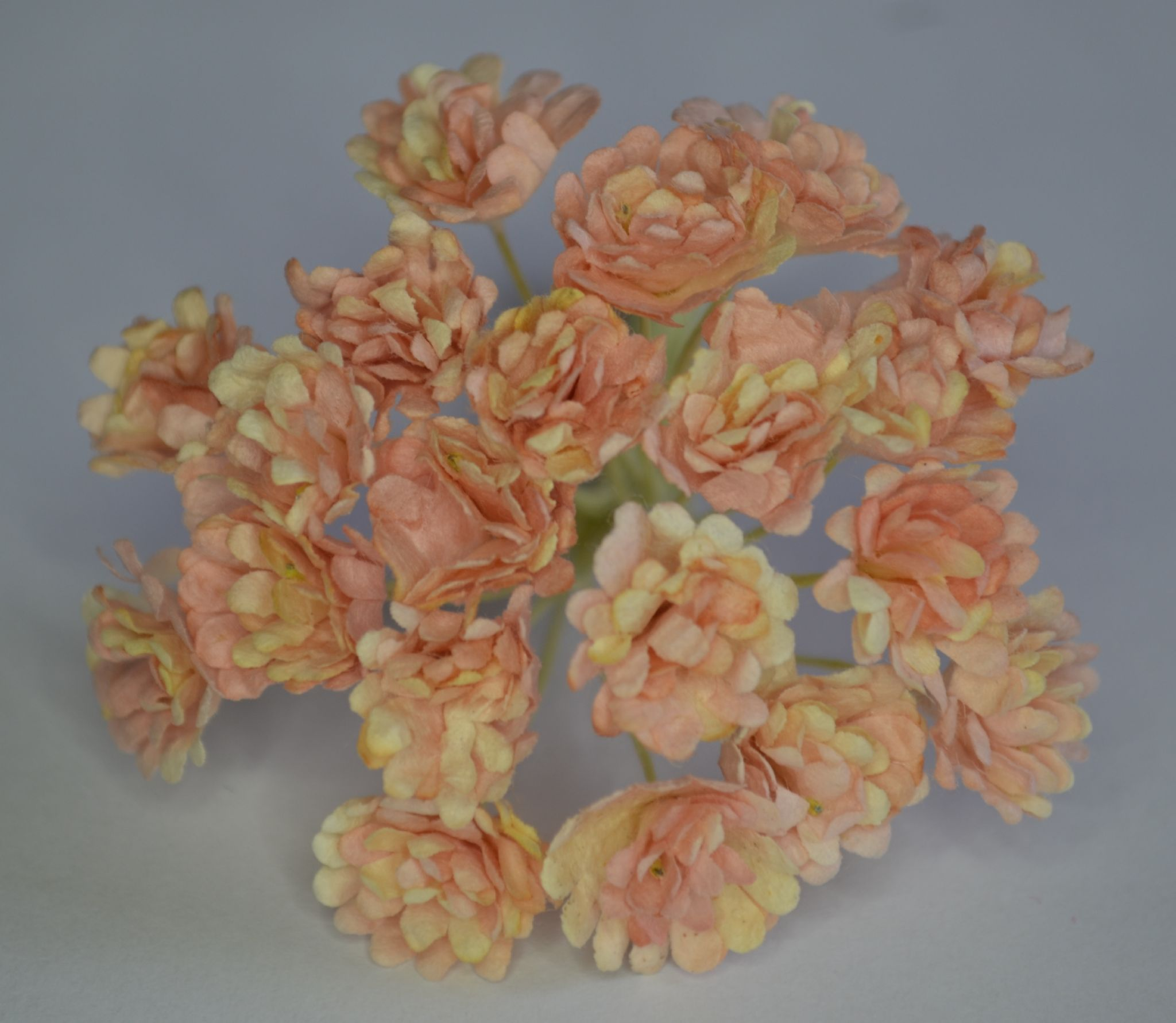 2 tone pale coral pink gypsophila forget me not mulberry paper flowers 2 tone pale coral pink gypsophila forget me not mulberry paper flowers mightylinksfo