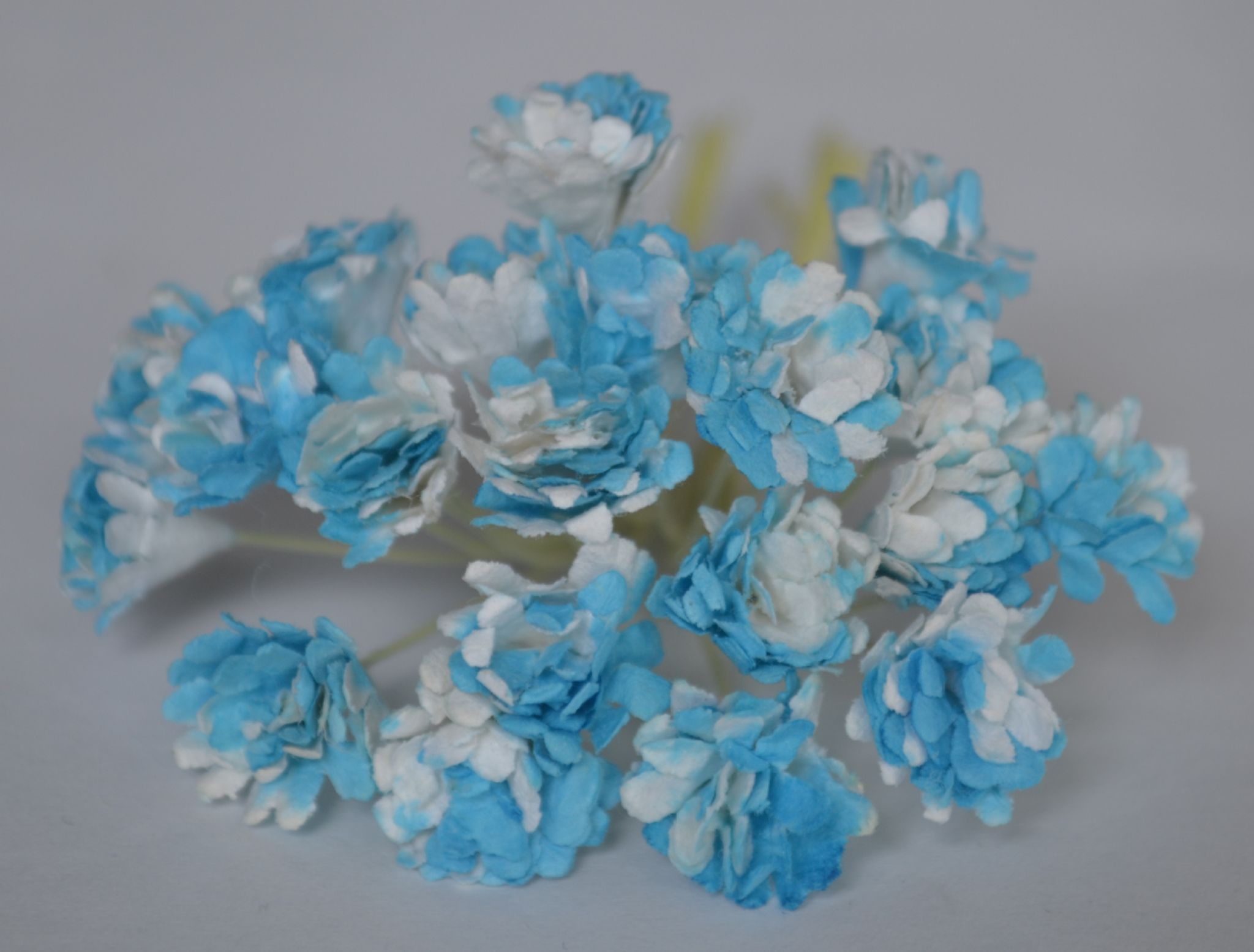 Bright cyan white gypsophila forget me not mulberry paper flowers bright cyan white gypsophila forget me not mulberry paper flowers mightylinksfo