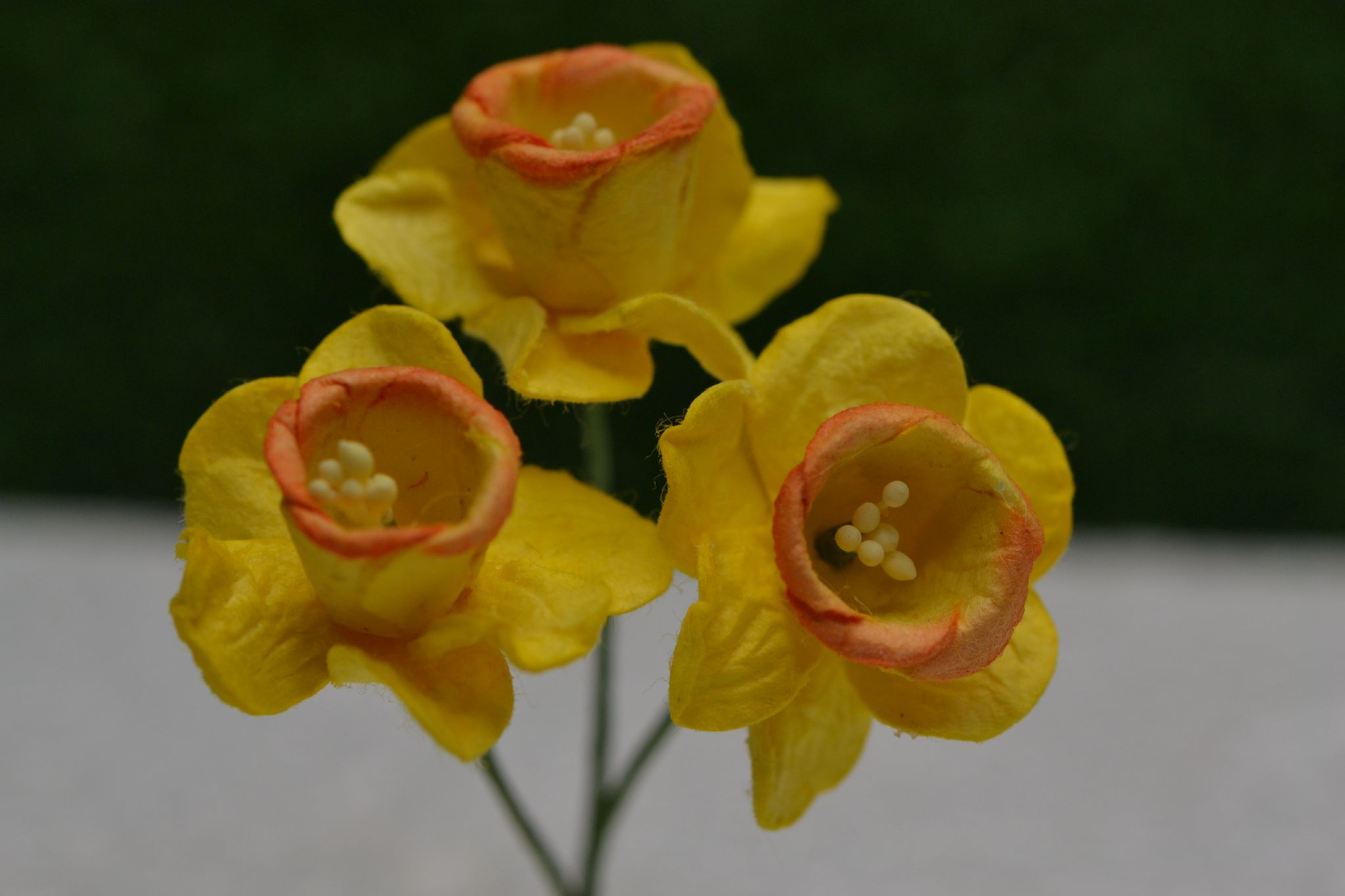 Yellow With Orange Cup Daffodil Nacissus 21cm Mulberry Paper Flowers